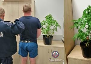 Uprawiał zakazaną roślinę