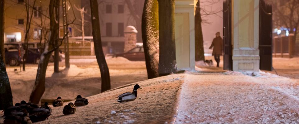 Zimowy Park Miejski - fotoreportaż