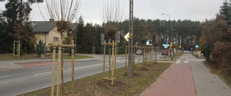 133 nowe drzewa na ul. Grzeszaka
