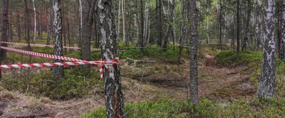 Niewybuchy z czasów wojny w lesie pod Mińskiem Mazowieckim